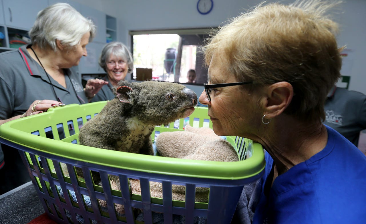 2019-11-19: (L-R) Sheila Bailey, Judy Brady and Clinical Director Cheyne Flanagan tend to a koala named Paul from Lake Innes Nature Reserve as he recovers from burns at The Port Macquarie Koala Hospital on Nov. 29, 2019 in Port Macquarie, Australia. Volunteers from the Koala Hospital have been working alongside National Parks and Wildlife Service crews searching for koalas following weeks of devastating bushfires across New South Wales and Queensland. Koalas rescued from fire grounds have been brought back to the hospital for treatment. An estimated 2.47 million acres of land has been burned by bushfire across Australia following catastrophic fire conditions in recent weeks, killing an estimated 1000 koalas along with other wildlife.