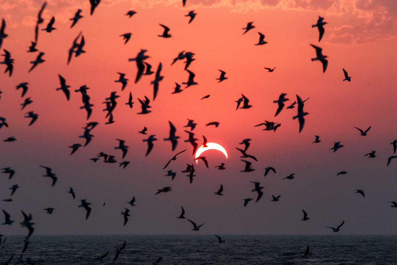 2019-12-26: Seagulls fly above a beach in Kuwait City during a partial solar eclipse event on Dec. 26, 2019.